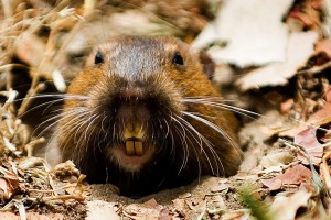 This is a gopher