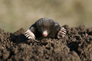 newslide-mole